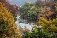 fujinami5.jpg
