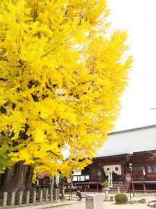 kokubunji3.jpg