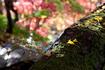 東山寺院の紅葉