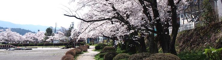 20190422宮川・万人橋・桜